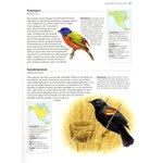 'Minibijbel Vogels'- David Alderton