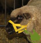Schapen/geiten halster Nylon