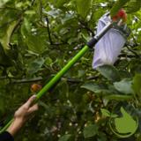 Fruitplukker / appelplukker met steel
