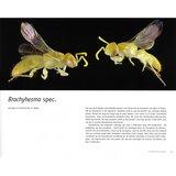 Bijen van Sam Droege en Laurence Packer